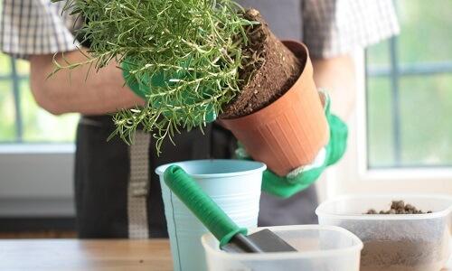 repot indoor plants