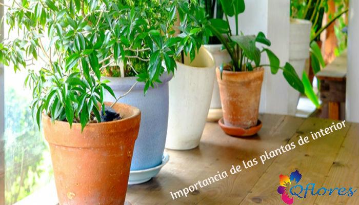 Beneficios de salud y estilo de vida de tener plantas en casa