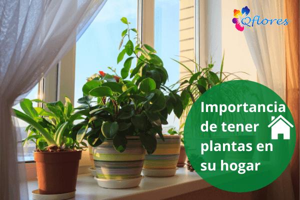 Importancia de tener plantas en tu hogar