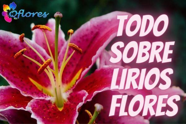 Todo sobre las flores de lirios: cosas que debes saber sobre los lirios