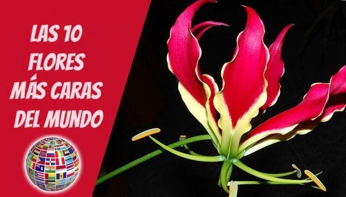 Las 10 flores más caras del mundo