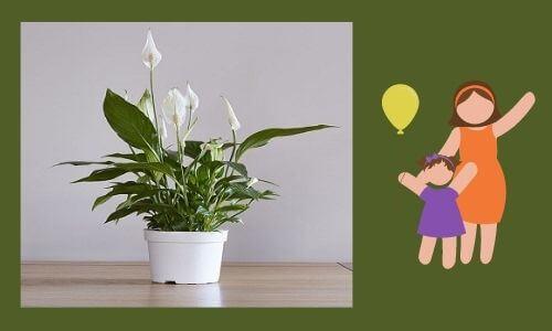 indoor plants for daughter