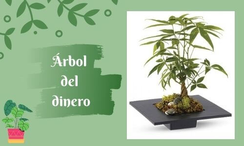 good luckk plant money tree