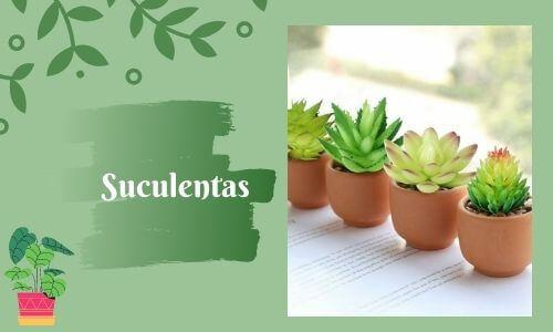 good luckk plants succulents
