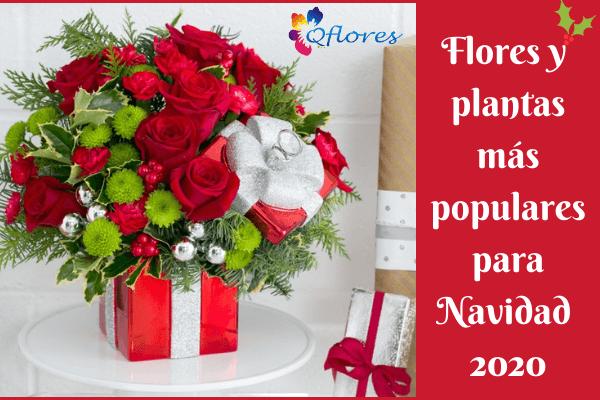 Flores y plantas más populares para Navidad 2020
