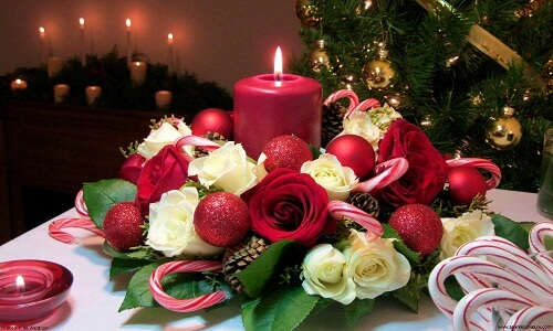 Rosas rojas y blancas