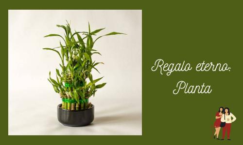 Regalo eterno: Planta