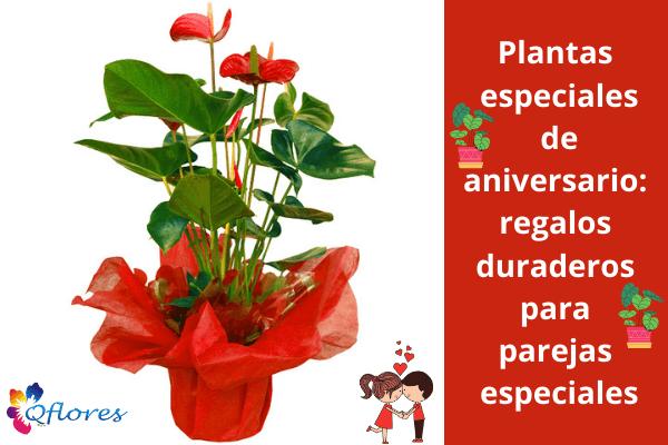 Aniversario Plantas especiales: regalos duraderos para parejas especiales