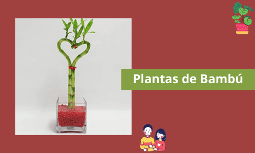 Plantas de bambú
