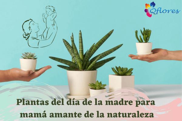 Plantas especiales para el día de la madre para mamá amante de la naturaleza