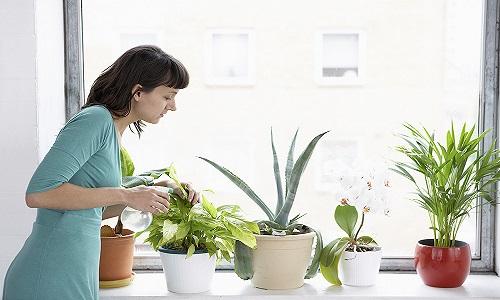 Pide plantas para ti