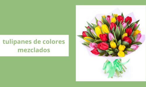 Tulipanes de colores mezclados