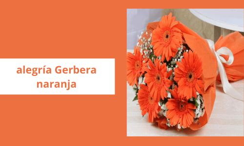 Alegría Gerbera naranja