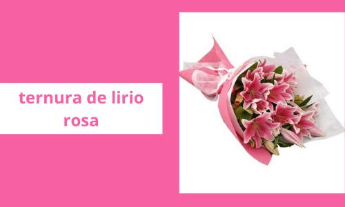 Cuteiness de Lirio rosa
