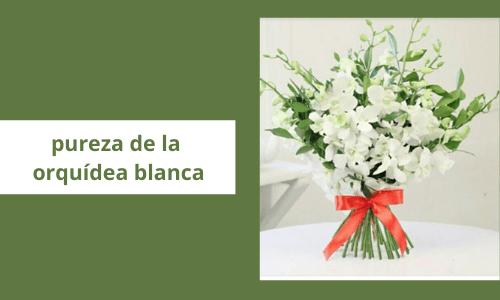 Pureza de la orquídea blanca