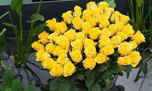 Alegres rosas amarillas