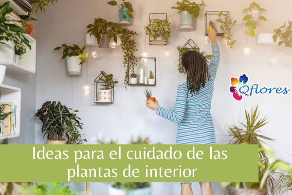 Ideas para el cuidado de las plantas de interior: cómo cuidar las plantas de interior