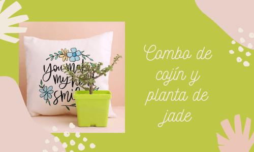 Combo de planta de jade y cojín