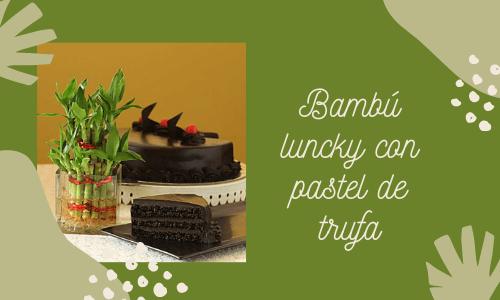 Bambú de la suerte con tortas de trufa