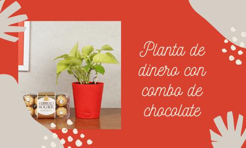 Planta de dinero con un combo de chocolate