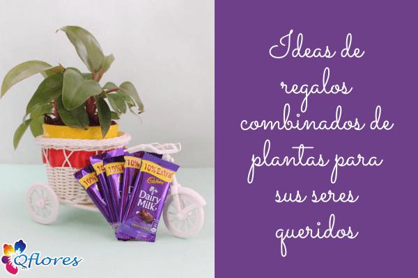 Amor de hoja perenne: Ideas de regalos combinados de plantas para sus seres queridos